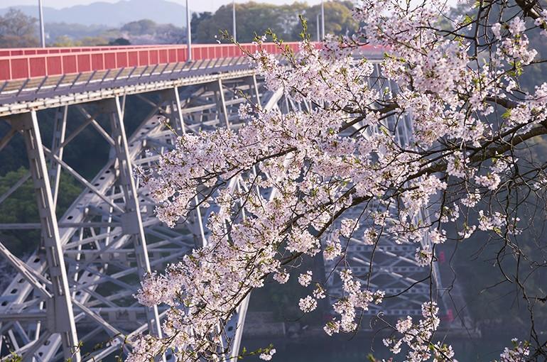 短い春の終わり「西海橋の桜」